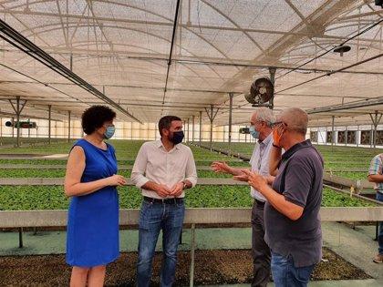 La Comunidad se reafirma como la sexta provincia más exportadora en el sector de la flor cortada