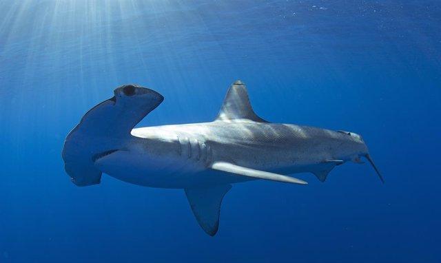 Las olas de calor en los océanos desplazan a las especies entre 10 y miles de ki