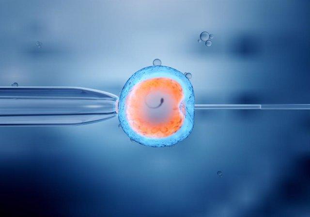 Coronavirus.- Un estudio sugiere que los embriones podrían ser susceptibles al v