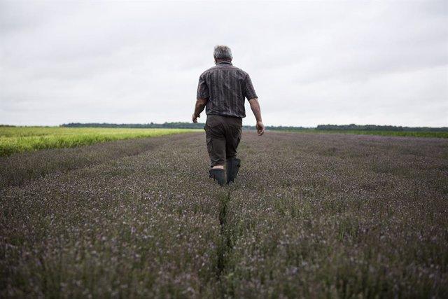 Los cambios en el uso del suelo pueden aumentar los riesgos de brotes de enferme