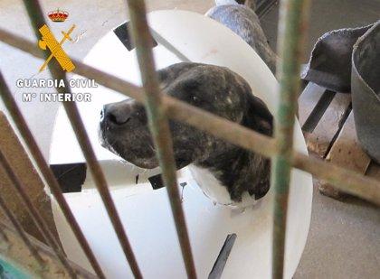 Dos imputados, uno de ellos con domicilio en Logroño, por abandonar a dos perros en Tafalla y Viana