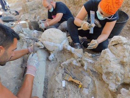 La última campaña arqueológica en Torrelara (Burgos) saca a la luz un espinosáurido y restos de pterosaurios