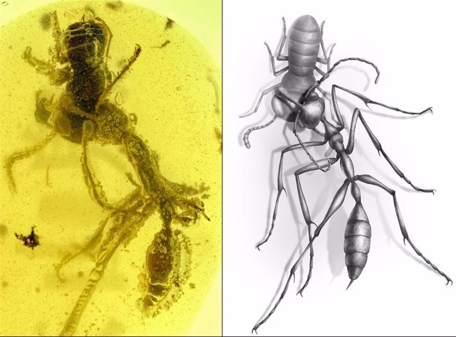 Hormiga 'Ceratomyrmex ellenbergeri' agarrando una ninfa de 'Caputoraptor elegans' (Alienoptera) conservada en ámbar que data de 99 millones de años