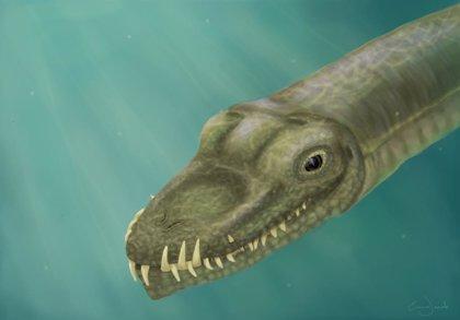 Resuelven el misterio de los reptiles de cuello súper largo, al demostrar que vivían en el agua