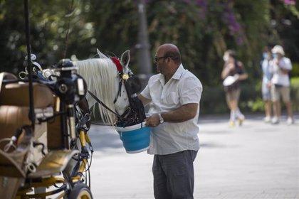 Casi toda España menos Asturias, Cantabria, Murcia y las islas tendrá hoy riesgo o riesgo importante por calor
