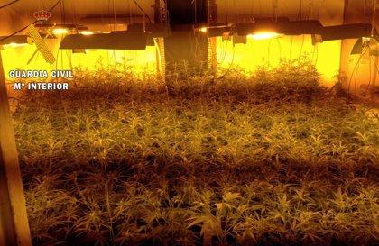 Tres detenidos por usurpar dos viviendas en El Casar de Escalona y cultivar marihuana en ellas