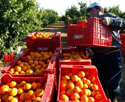 AVA y La Unió piden a la distribución que no cambie producción autóctona por foránea por el impacto sobre el clima