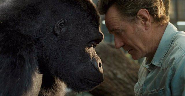 Tráiler de El magnífico Iván: El entrañable gorila pintor llega a Disney+ el 11 de septiembre
