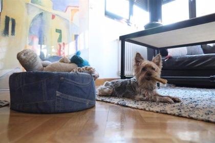 Guillena (Sevilla) renueva el convenio con el Colegio de veterinarios para identificación de animales de compañía