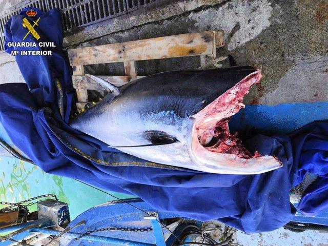 Atún rojo pescado de forma ilegal en una imagen de archivo.