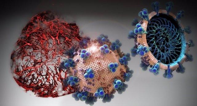 En los cultivos celulares analizados en el presente estudio, el hrsACE2 inhibió la carga de coronavirus por un factor de 1.000-5.000
