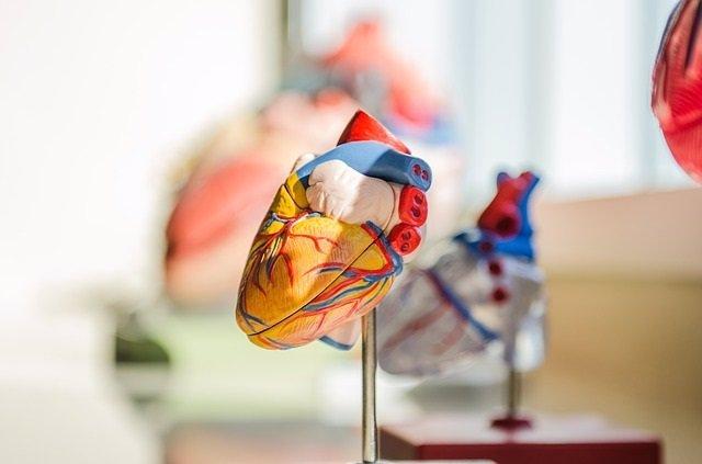 El cribado nutricional puede ayudar a determinar el pronóstico de la angina y el