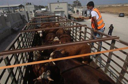 Israel cierra el único paso de mercancías a la Franja de Gaza tras los últimos ataques