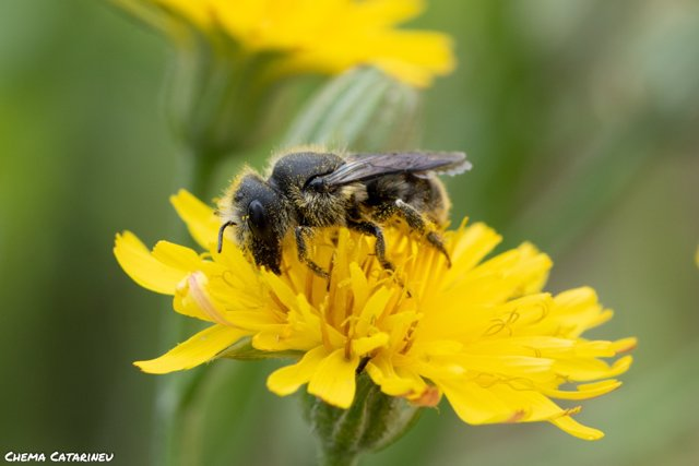 La contaminación del aire también afecta a la salud de los insectos polinizadore