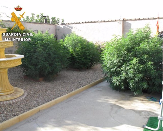 Seis detenidos en la meseta de Ocaña tras el desmantelamiento de 2 plantaciones de marihuana con 662 plantas