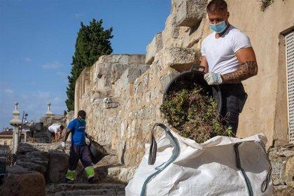 Las labores de limpieza de la muralla romana de la capital aragonesa se llevan a cabo esta semana