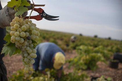 Los empresarios del campo de Castilla-La Mancha deberán listar a los temporeros contratados en la vendimia