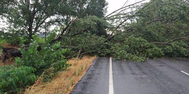Casi 50 incidencias en C-LM por el temporal con desprendimiento de fachadas, caídas de árboles y achiques de agua