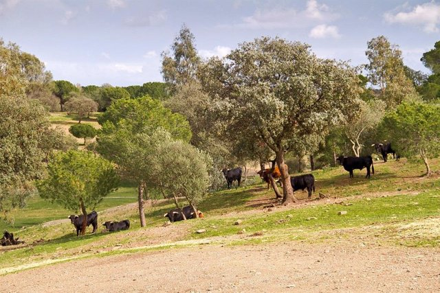 Finca en Huelva con toros bravos.