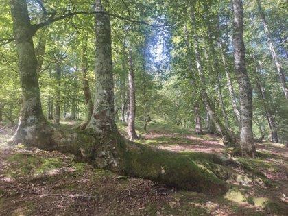El Principado lanza una convocatoria de ayudas para el sector forestal