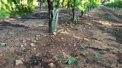 Castilla-La Mancha, entre las más afectadas por los daños de las tormentas
