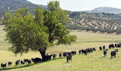 La Junta recibe un total de 888 solicitudes de ayuda a la ganadería extensiva