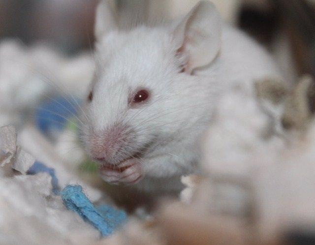 Consiguen eliminar cánceres resistentes a la inmunoterapia, en un estudio con ra