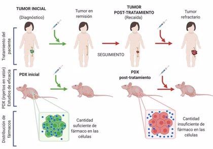 Reproducen por primera vez en ratones un cáncer infantil para descubrir por qué es resistente a fármacos
