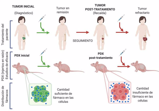 Reproducen en ratones, por primera vez en el mundo, un cáncer infantil en sus diferentes etapas para descubrir por qué se hace resistente a la medicación
