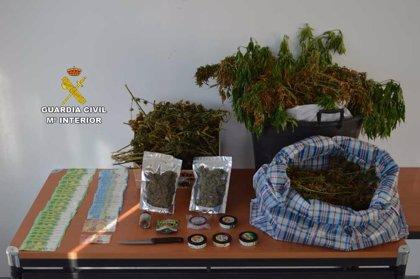 """La Guardia Civil desactiva un grupo """"muy activo"""" de venta de marihuana a turistas en Magaluf y Santa Ponça"""