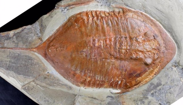 Un ojo de 429 millones de años de antigüedad proporciona una visión de la vida d