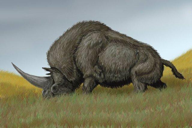 Genomas antiguos sugieren que los rinocerontes lanudos se extinguieron por el ca