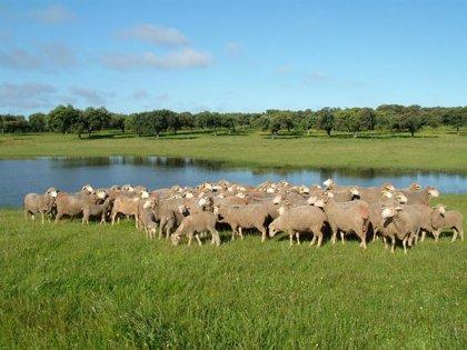 Cordero de Extremadura recomienda siete enclaves en la región para descubrir este producto durante el verano