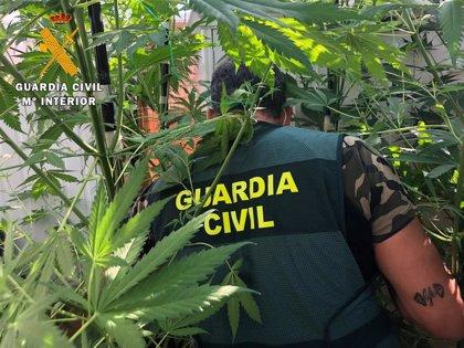 Localizado un laboratorio indoor de marihuana en las afueras de Ávila y detiene a sus dos propietarios