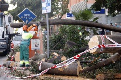 El Gobierno destina casi 331.000 euros a ocho municipios de la provincia de Málaga por los daños del temporal DANA