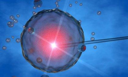 Científicos españoles colaboran en la creación de óvulos artificiales utilizando células madre