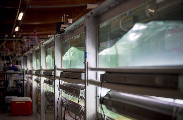 Microbios marinos inciden en el clima al contacto con aire contaminado