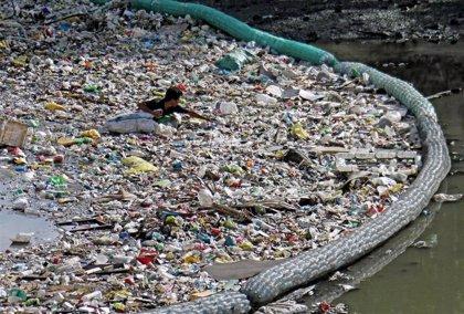 La contaminación por metales pesados, relacionada con la resistencia a los antibióticos