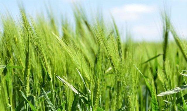 Nuevo bloque de construcción esencial para la vida vegetal
