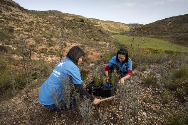 CaixaBank compensa sus emisiones de CO2 con un proyecto para proteger bosque ama