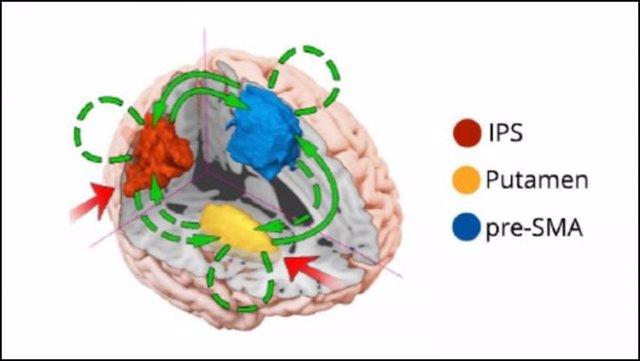 Modelo sobre la influencia moduladora de la multitarea en el cerebro.