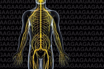 Salud.-Una alianza europea de investigación realiza nuevos hallazgos sobre la ataxia