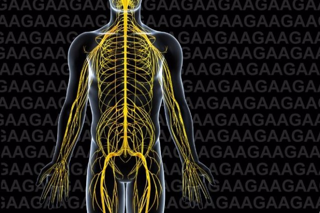 Una alianza europea de investigación realiza nuevos hallazgos sobre la ataxia