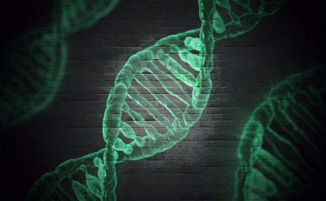 Investigadores españoles identifican 568 genes con potencial para producir cánce