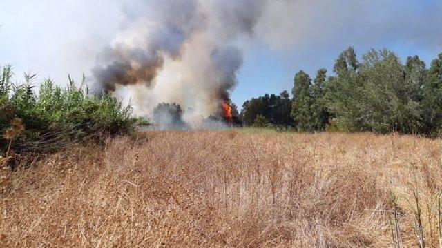 Incendio en el entorno del Corredor Verde del Guadiamar