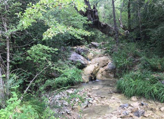 Espacio natural, medioambiente, naturaleza, agua, riachuelo, frondosidad