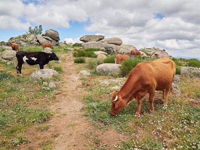 Más de 18,6 millones llegan este jueves a agricultores y ganaderos en zonas de montaña o con limitaciones naturales