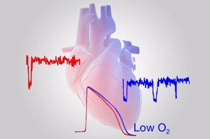 Salud.-Las pruebas genéticas son útiles para seleccionar la terapia antiplaquetaria en pacientes operados del corazón