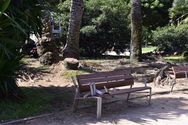 Zona del parc de la Ciutadella (Barcelona) on ahir, dimarts dia 25 d'agost, va perdre la vida un home de 41 anys i va resultar ferida una dona en caure'ls damunt una palmera del recinte. A Barcelona, Catalunya, (Espanya), a 26 d'agost de 2020.