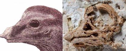 Embriones fósiles revelan cuernos de rinoceronte en los saurópodos